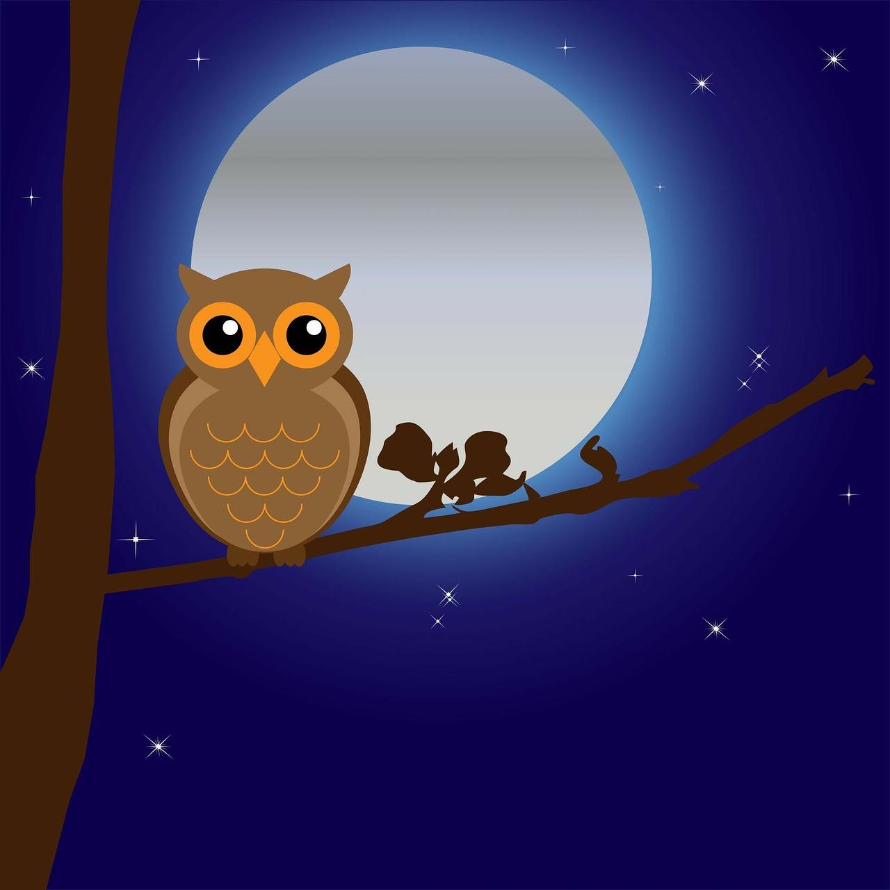owl-163574_1280