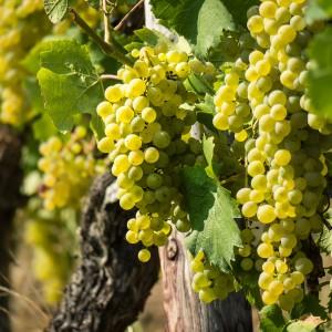 wine-3646190_1920